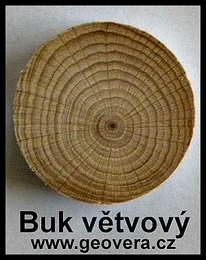 cwg-bukovy-suk-buk-vetvovy